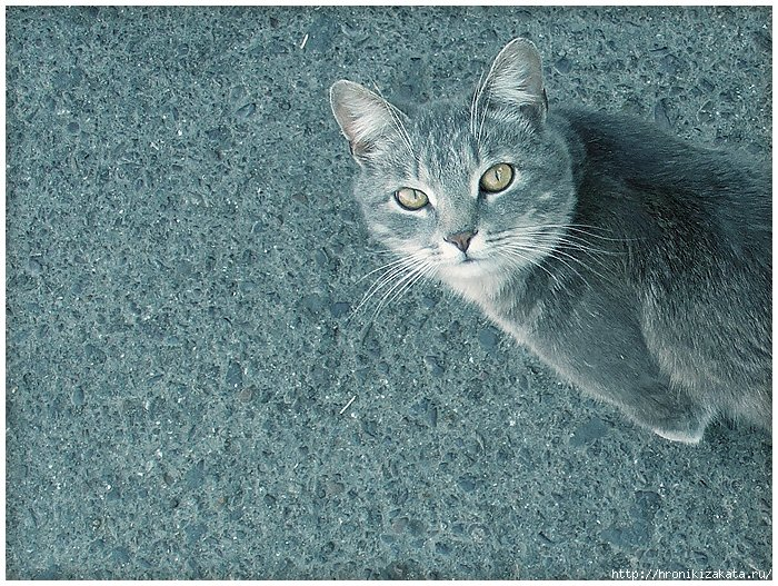 Купить котенка в оренбурге