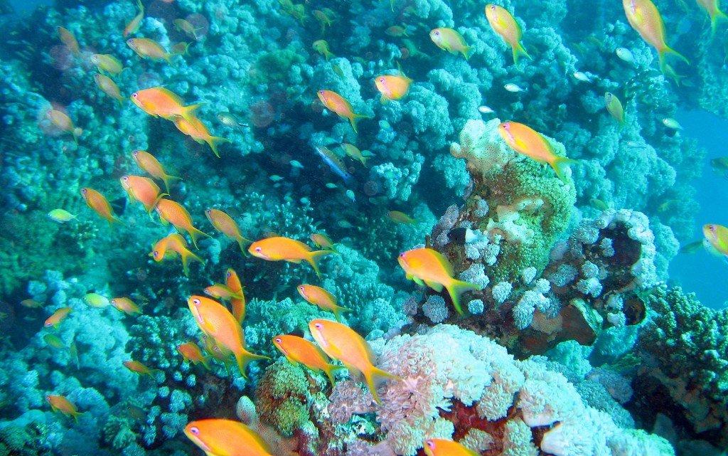 красивые заставки на рабочий стол, фотографии подводного мира, тропические рыбки, рабочий стол Windows