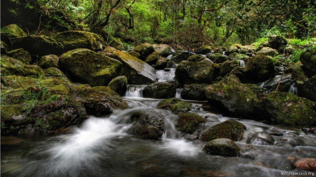 фотография лесного водопада, красивые фотографии природы, фото водопада, обои на рабочий стол, фото дикой природы
