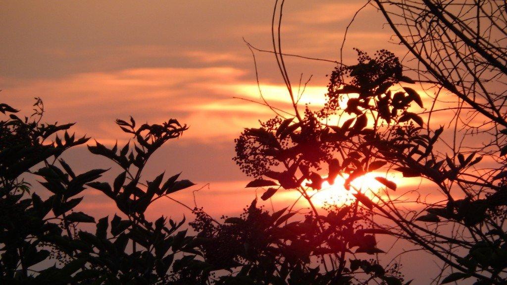 деревья,листья,закат,фотография