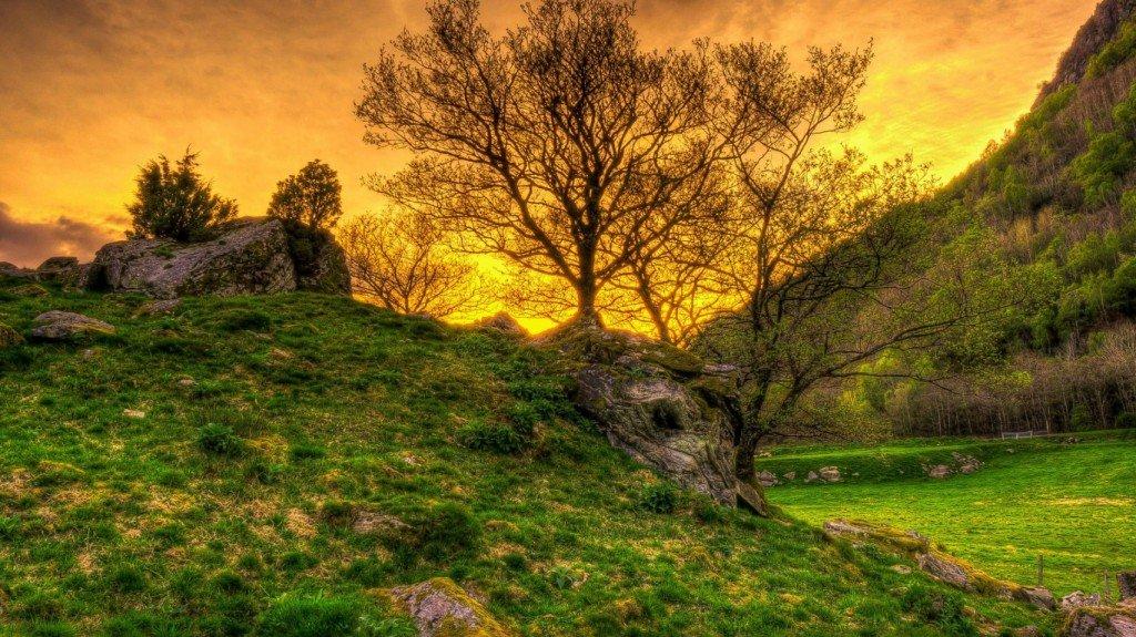 закат,солнце,фото,дерево