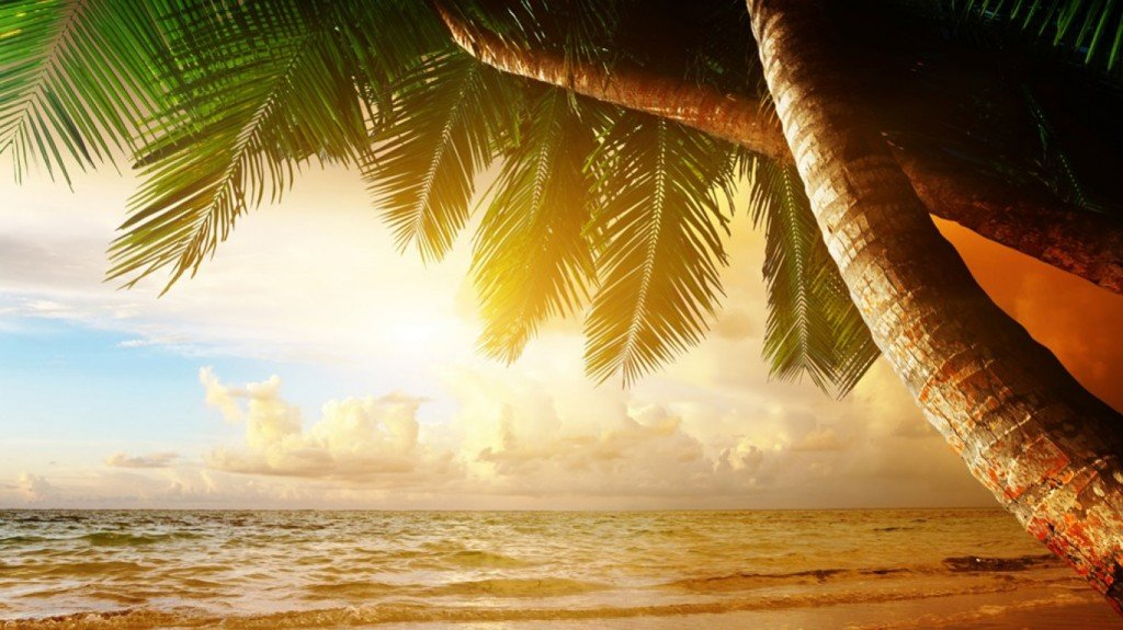 пальмы,море,заходящее,солнце,скачать,обои