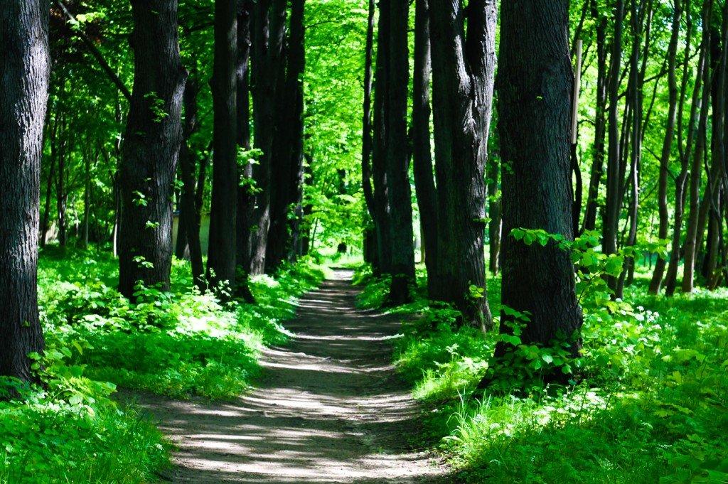 побережье,Балтийское,деревья,берег,фото,янтарный