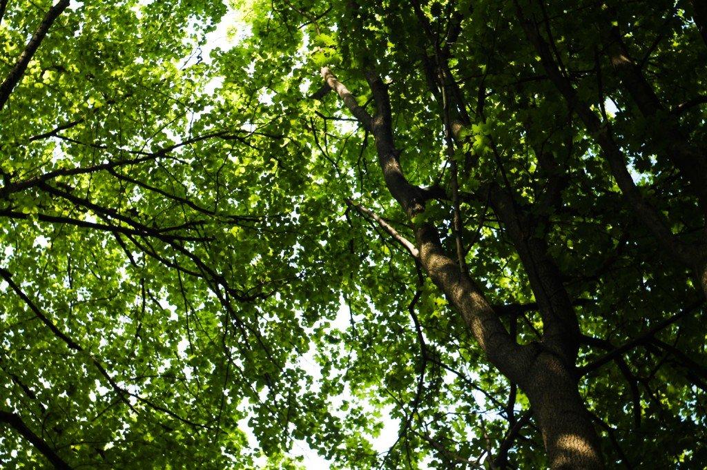 калининградская,область,янтарный,деревья,небо,фото