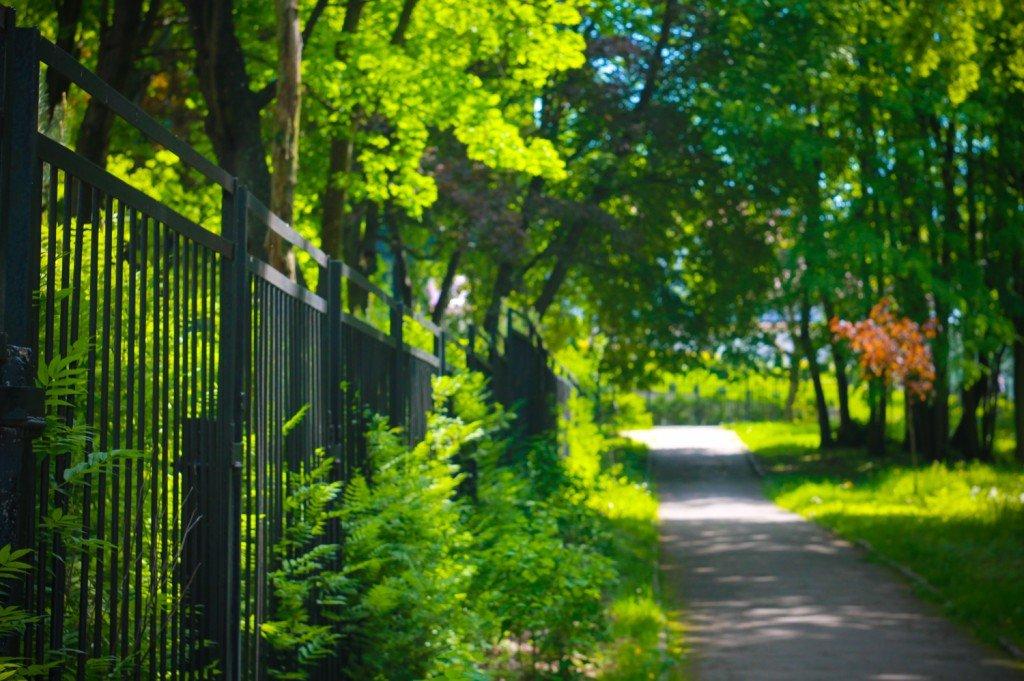 парк,беккера,аллея,фото,янтарный,калининградская,область
