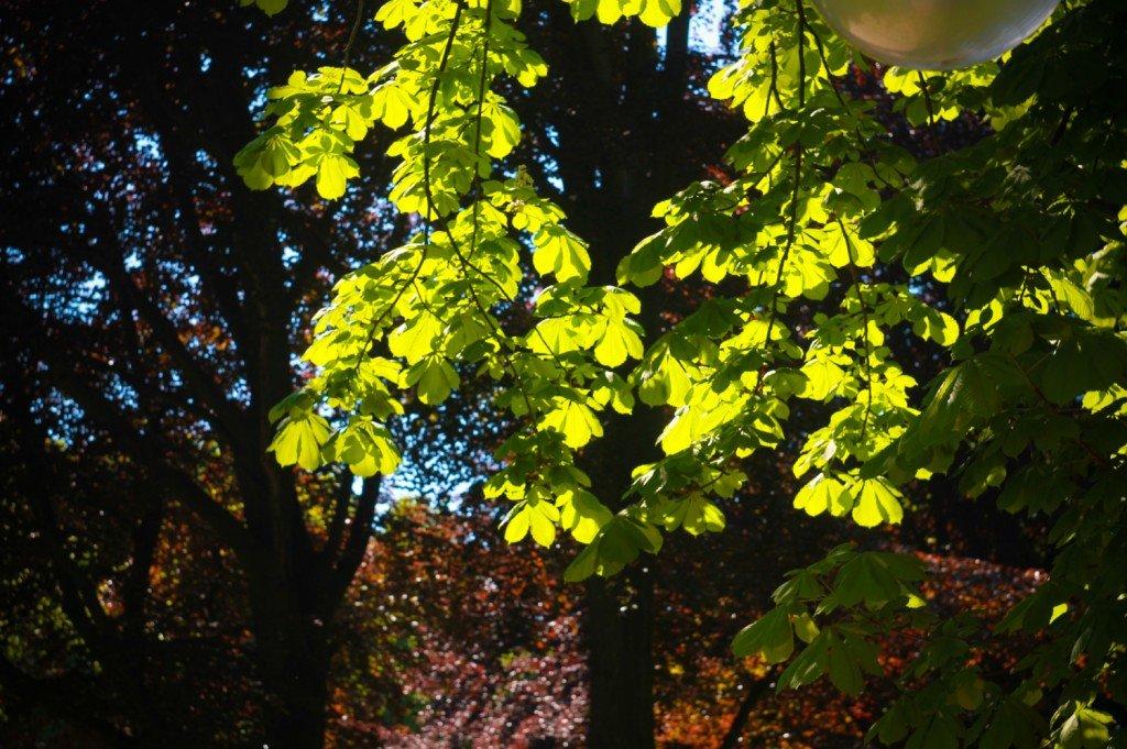 парк,беккера,листья,янтарный
