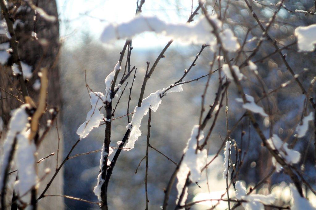 снег, лед, тайга, ветви, canon, Гелиос - 44ММ 2/58, весна