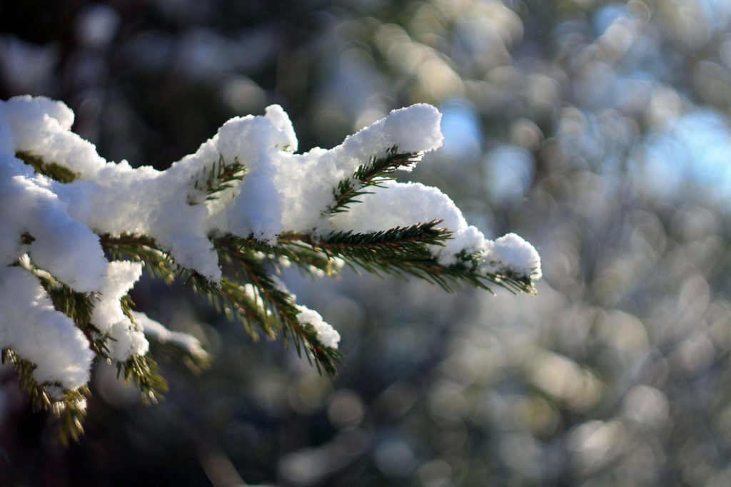 снег, ель, тайга, 2016, canon, Гелиос - 44ММ 2/58, объектив, весна, лес, лапник