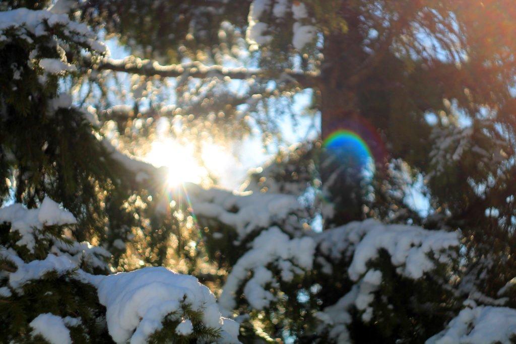 ель, снег, ветви, тайга, сибирь, фото, природа, утро, canon, гелиос